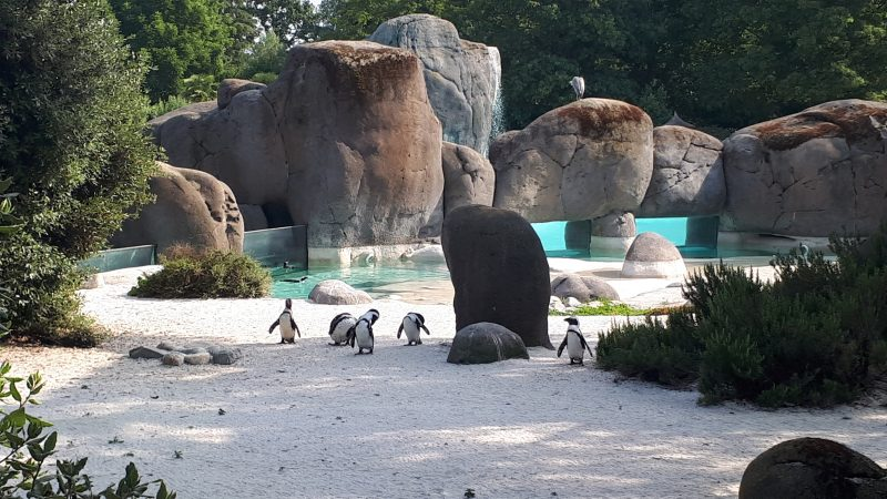 polaretti pinguini bambini