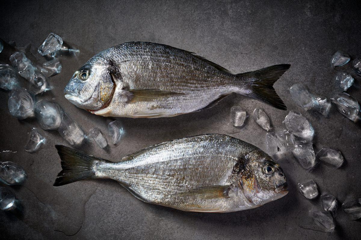 dare il pesce nello svezzamento