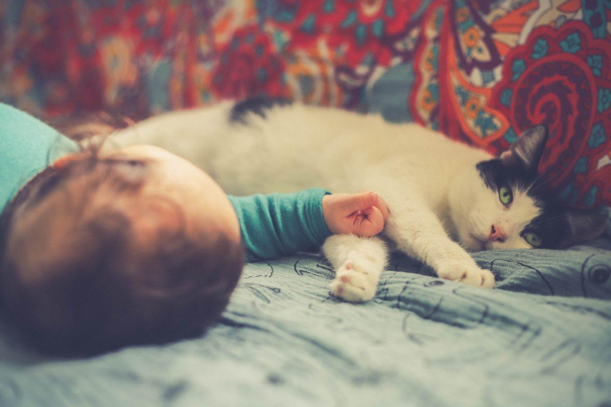 Pelo del gatto e neonato