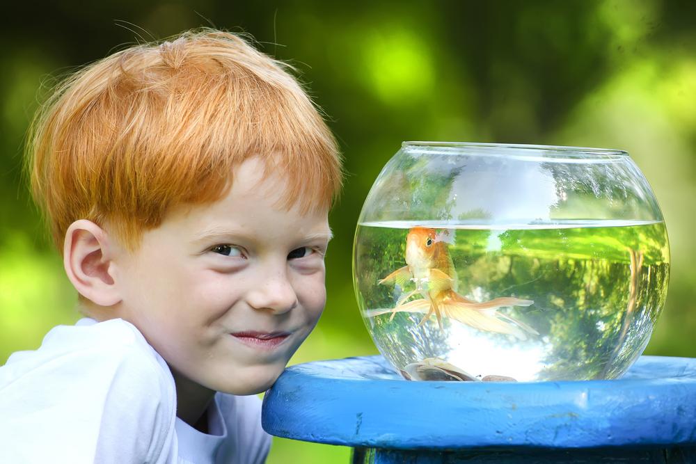 Bambino pesce rosso