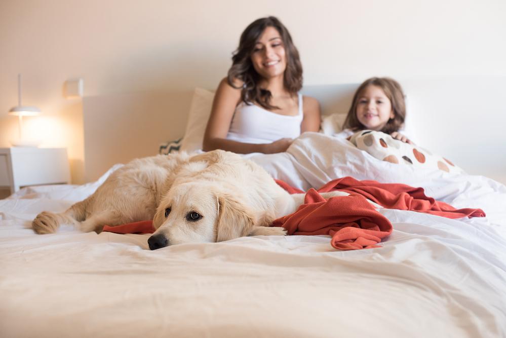 cane sul letto in famiglia